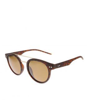 POLAROID Eyewear – PLD6031/S (Havana)